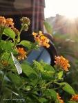 the sun for the garden