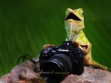 Photography of the Lizard